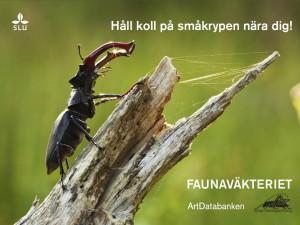 Faunaväkteribild